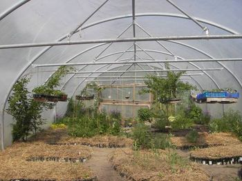 Polytunnel in early spring showing hanging shelves