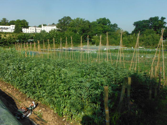 School Farm CSA