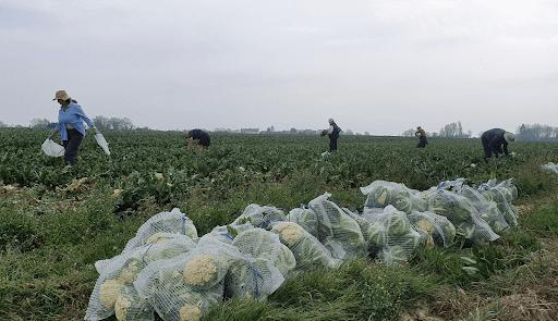 People in field